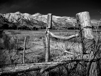 Fence, Alabama Hills, CA, 1984