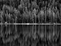 Tree Reflections, Tenaya Lake, Yosemite, CA, 2012